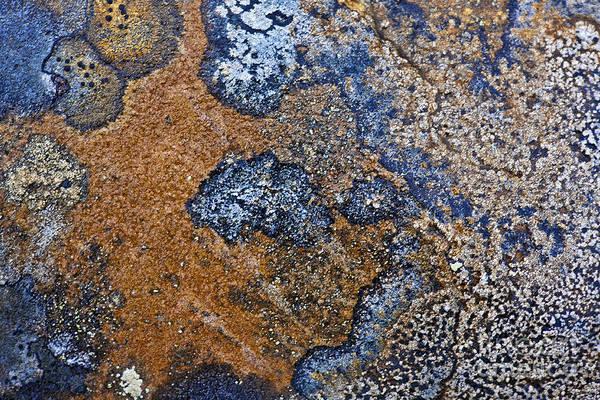 Orange Lichen Photograph - Lichen Pattern Series - 35 by Heiko Koehrer-Wagner