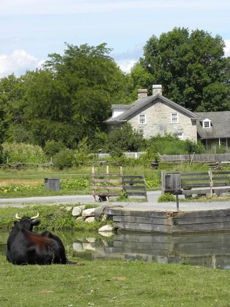 Photograph - Life On The Farm by Peggy  McDonald