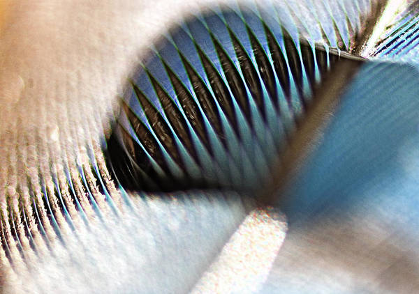Blue Jay Photograph - Light As A Feather by Susan Capuano