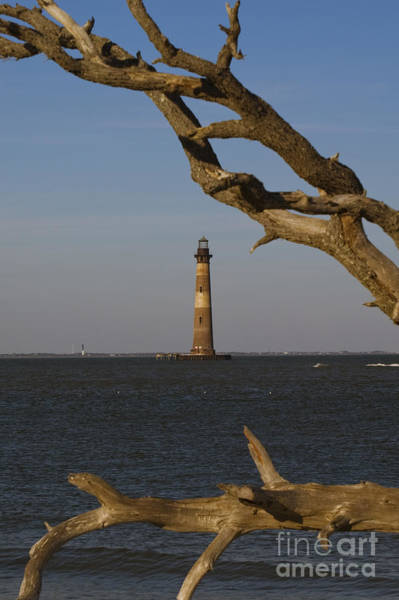 Fort Sumpter Photograph - Lighthouse Through Driftwood by Tim Mulina