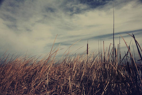 Cattails Wall Art - Photograph - Like The Way You Used To Run Your Fingers Through My Hair by Laurie Search