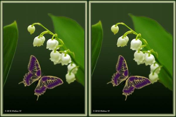 Wall Art - Photograph - Lily Of The Valley - Gently Cross Your Eyes And Focus On The Middle Image by Brian Wallace