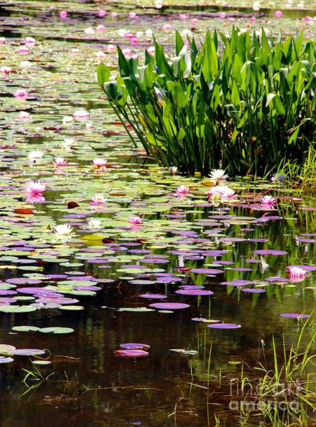 Wall Art - Photograph - Lily Pad Lake by Pauline Ross