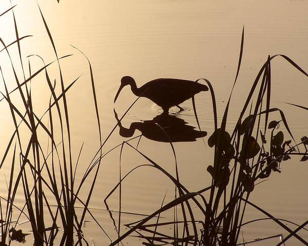Limpkin At Dawn Art Print