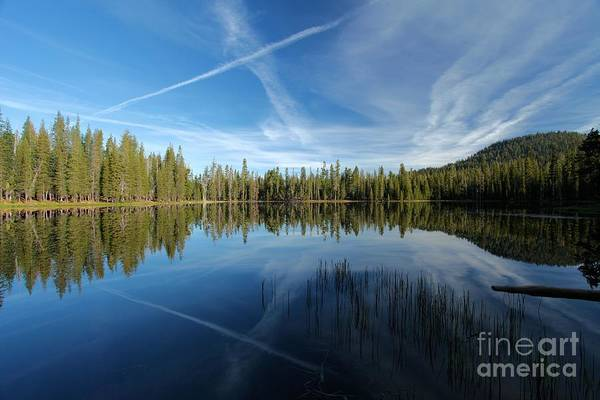 Photograph - Line Through The Trees by Adam Jewell