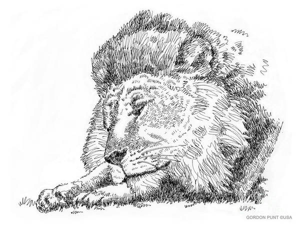 Drawing - Lion-art-black-white by Gordon Punt
