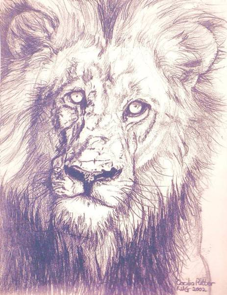 This Time For Africa Painting - Lion Stare by Cecilia Putter