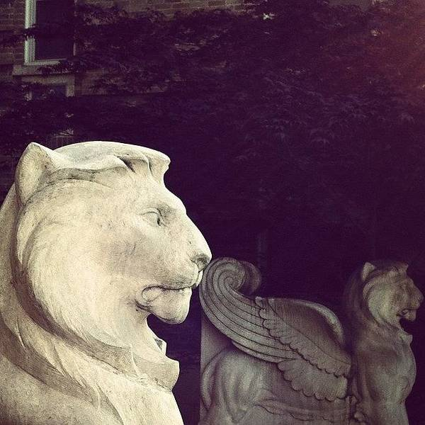 Wall Art - Photograph - #lion #statue by Jenna Luehrsen