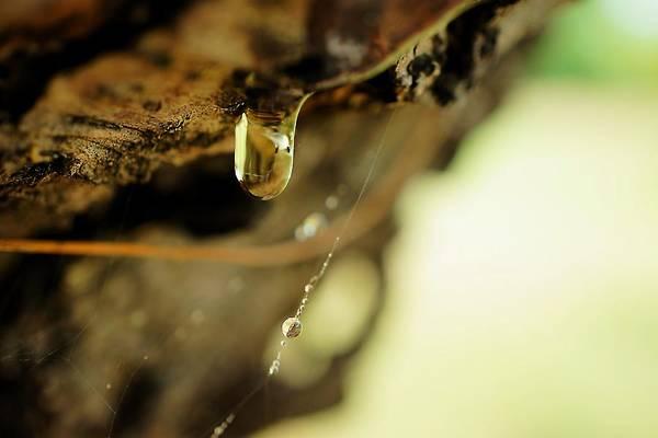 Photograph - Liquid Amber by Beth Akerman