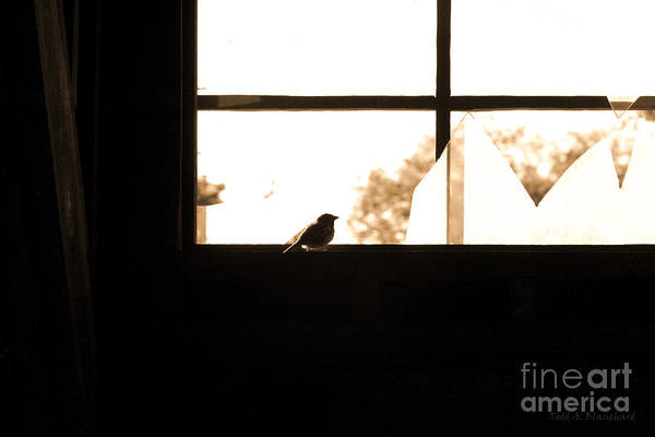 Photograph - Little Bird by Todd Blanchard