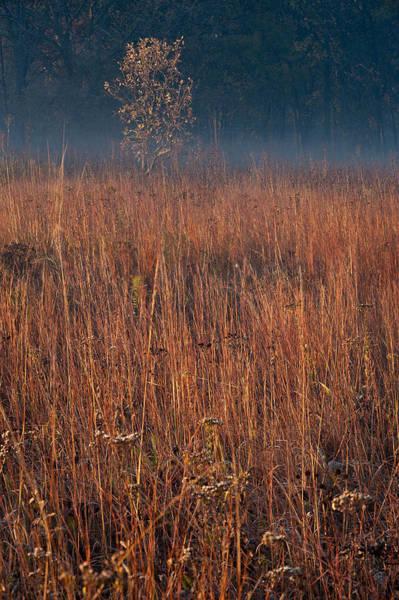 Native Plant Photograph - Little Bluestem Prairie Grass by Steve Gadomski