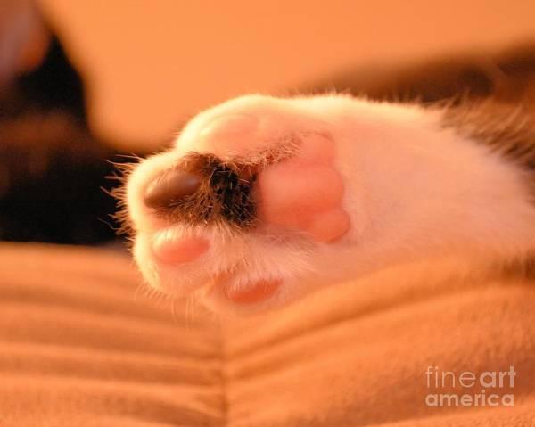 Photograph - Little Foot by Melissa Jacobsen