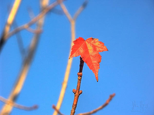 Napanee Photograph - Little Leaf by John Herzog