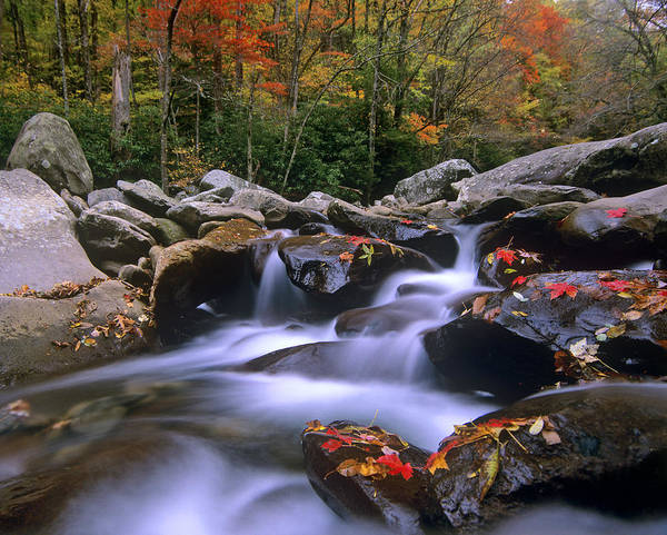 Fall Photograph - Little Pigeon River Cascading Among by Tim Fitzharris