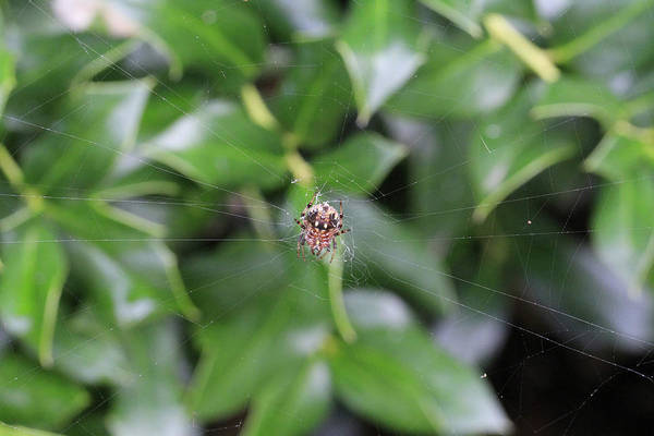 Wall Art - Photograph - Little Spider by Douglas Barnard