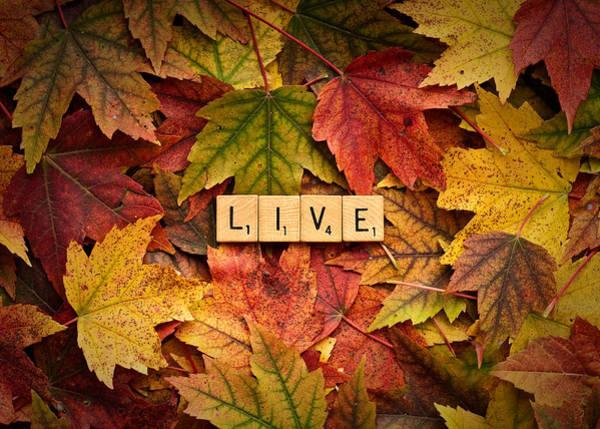 Photograph - Live-autumn by  Onyonet  Photo Studios