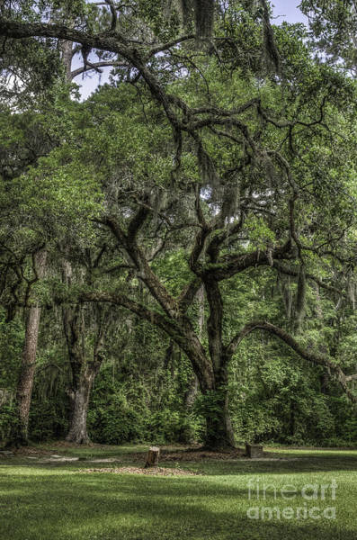 Photograph - Live Oak And Grave by David Waldrop