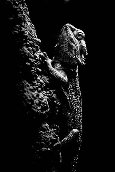 Hakon Photograph - Lizard by Hakon Soreide