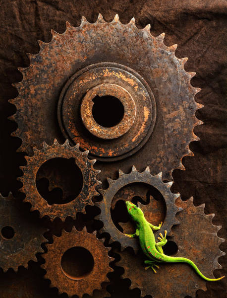 Lizard Photograph - Lizard On Gears by John Wong
