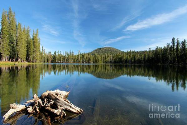 Photograph - Log In The Lake by Adam Jewell