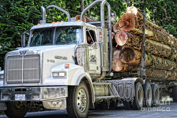Photograph - Logging Truck by Traci Cottingham