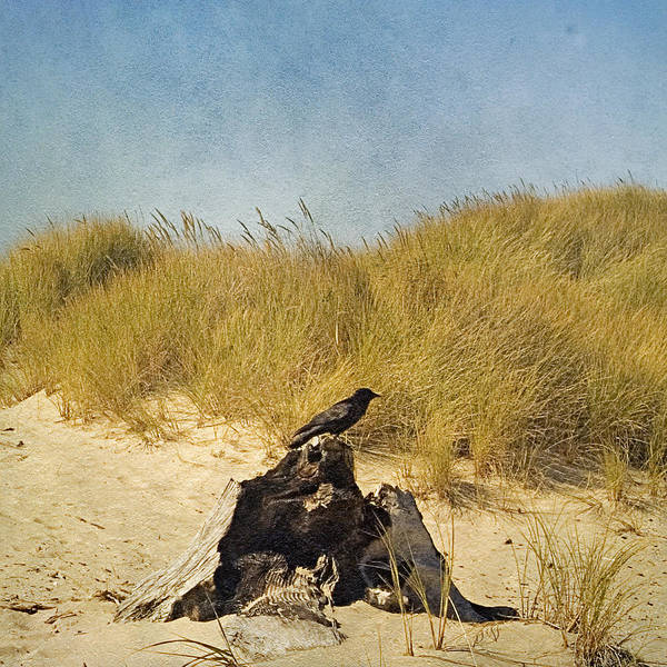 Oregon Dunes Photograph - Lone Crow by Bonnie Bruno