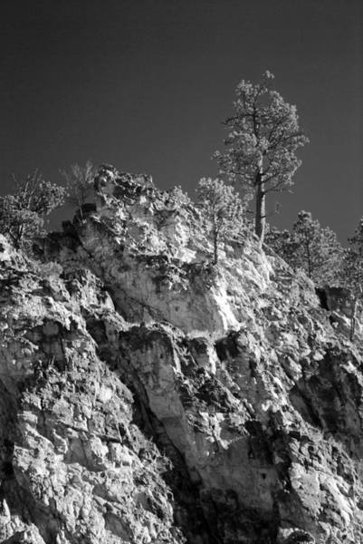 Dakota Photograph - Lone Pine In Black Hills by Twenty Two North Photography