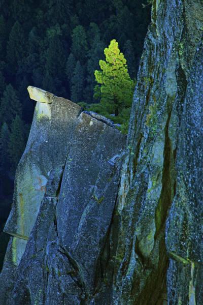 Photograph - Lone Pine by Rick Berk