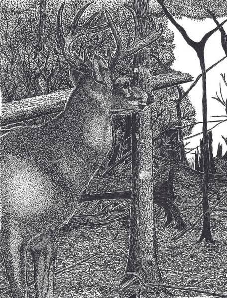 White Tailed Deer Drawing - Lone Stag In A Wood by Tony  Nelson