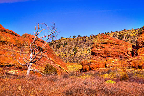 Photograph - Lone Tree At Red Rocks Park by David Patterson