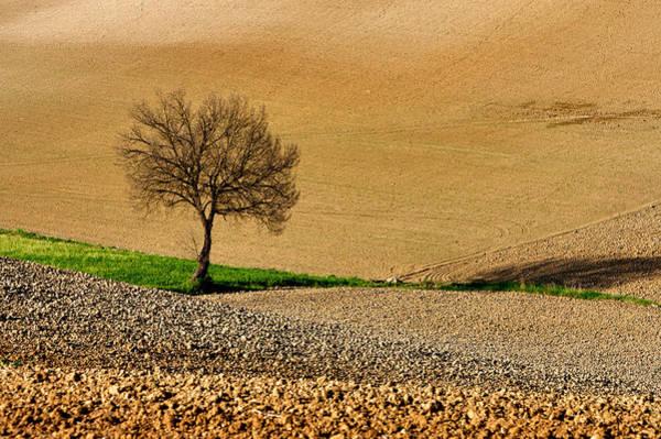 Wall Art - Photograph - Lone Tree by Guido Tramontano Guerritore