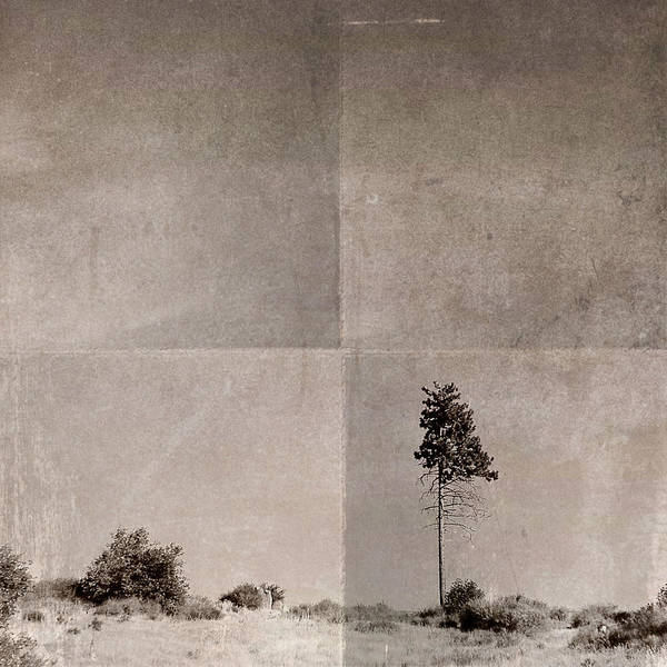 Photograph - Lone Tree by Kevin Bergen