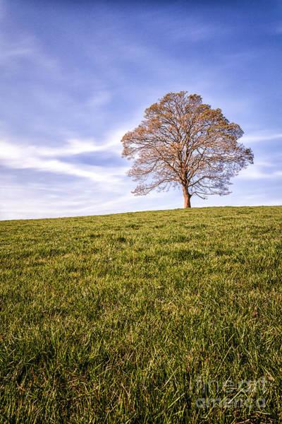 0 Wall Art - Photograph - Lone Tree On The Hill Colour by John Farnan