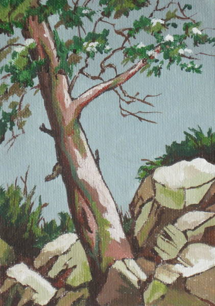 Flagstaff Painting - Lone Tree by Sandy Tracey