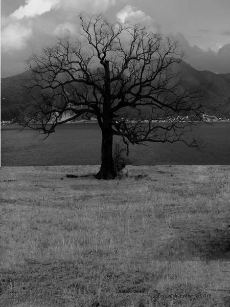 Photograph - Lonely by Ericamaxine Price