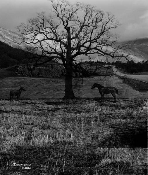 Photograph - Lonely No More by Ericamaxine Price