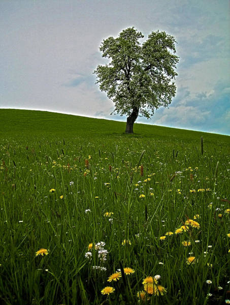 Wiese Wall Art - Photograph - Lonely Tree ...  by Juergen Weiss