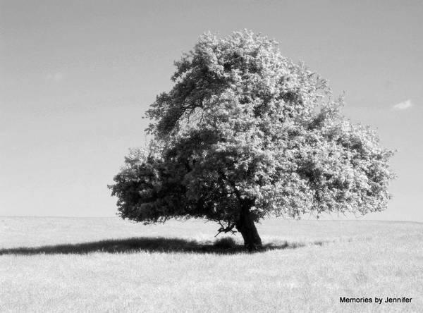 Jennifer Stone Photograph - Lonely Tree by Jennifer Stone
