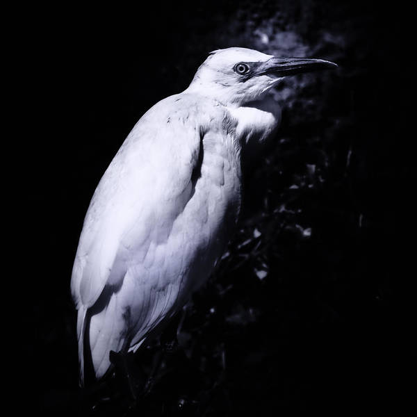 Photograph - Lonesome Egret by Daniel Marcion