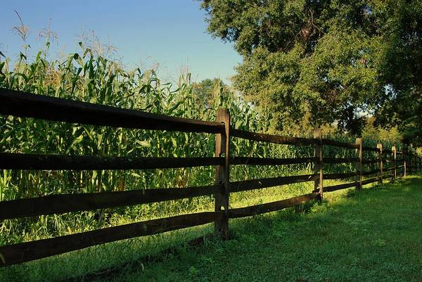 Photograph - Longstreet Farm Growing Corn - Holmdel Park by Angie Tirado