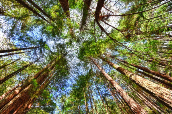 Photograph - Look To The Sky by Beth Sargent
