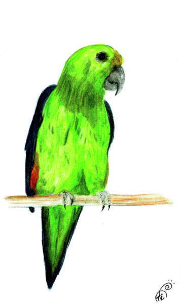 Green Parrot Drawing - Looking At You by Tiphanie Erickson