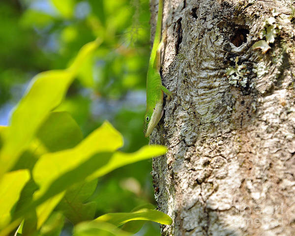 Green Anole Photograph - Looking Lizard by Al Powell Photography USA