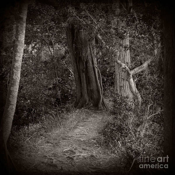 Photograph - Lost In The Forest by Sharon Mau