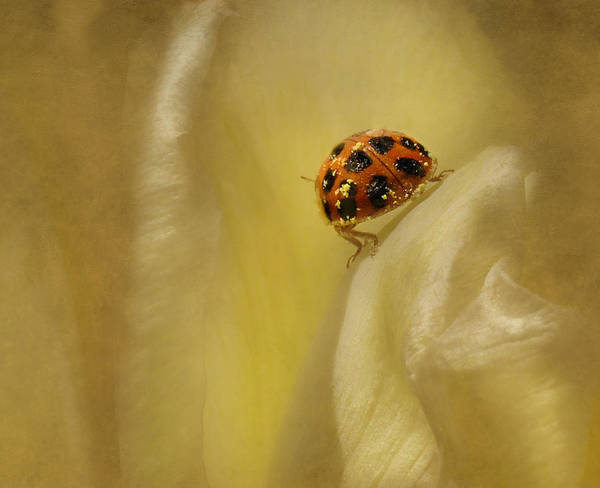 Photograph - Lost In Yellow by Robin-Lee Vieira