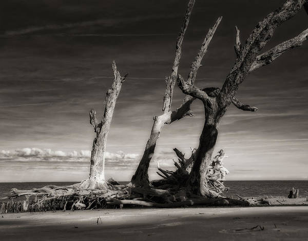Photograph - Lost World by Mario Celzner