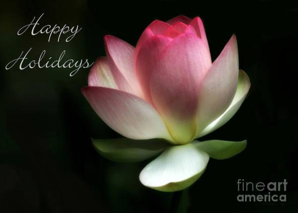 Photograph - Lotus Flower Holiday Card by Sabrina L Ryan