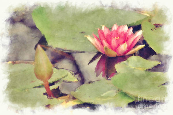 Photograph - Lotus Flower12 by Donna Bentley