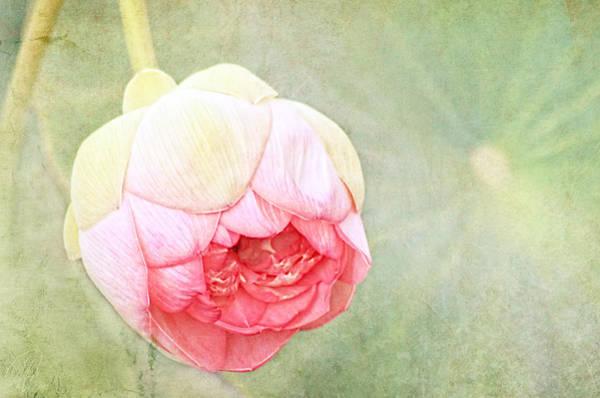 Wall Art - Digital Art - Lotus by Margaret Hormann Bfa