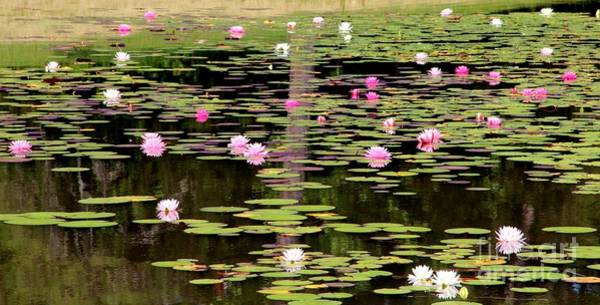 Wall Art - Photograph - Lotus Waterscape by Pauline Ross